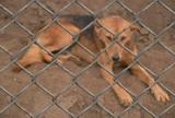 Schroniska dla bezdomnych zwierząt w czasie pandemi. Jak sobie radzą w tym trudnym czasie?