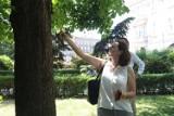 Ekspert o kaliskich plantach: Znajdują się tu duże drzewa, w dość dobrym stanie zdrowotnym ZDJĘCIA