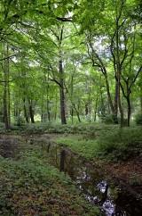 Powołane dla ochrony piękna naszego krajobrazu