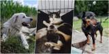 Są cudowne! Zwierzaki do adopcji w Oleśnicy. Te kochające i mądre czworonogi szukają domu