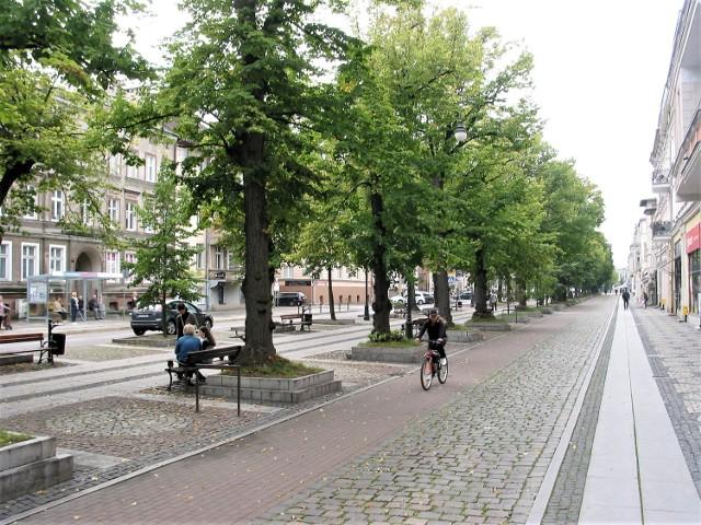 Aleja lipowa na al. Wojska Polskiego, gdzie rewitalizacja zaszkodziła pomnikowym drzewom