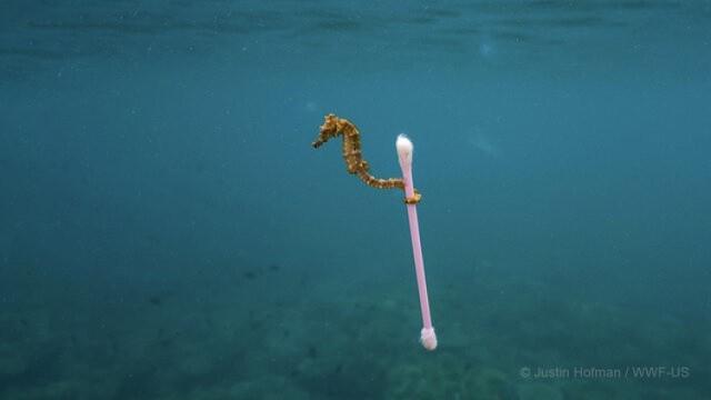 Ponad 80 proc. odpadów w morzach stanowią tworzywa sztuczne. Produkty objęte nowymi przepisami stanowią 70 proc. wszystkich odpadów morskich - oszacowała Komisja Europejska