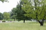 PKP chce wyciąć ponad 3 tys. drzew i hektar krzewów w Warszawie. W ich miejscu powstanie tymczasowy magazyn