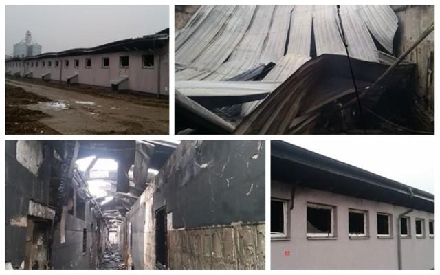 Wielki pożar w Poćwiardowie. Ogień zabił ponad trzy tysiące zwierząt
