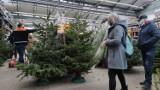 Boże Narodzenie 2020, Piotrków: żywe choinki na sprzedaż w marketach budowlanych [CENY, ZDJĘCIA]