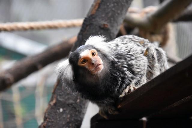 Egzotyczne małpki zamieszkały w legnickiej palmiarni.