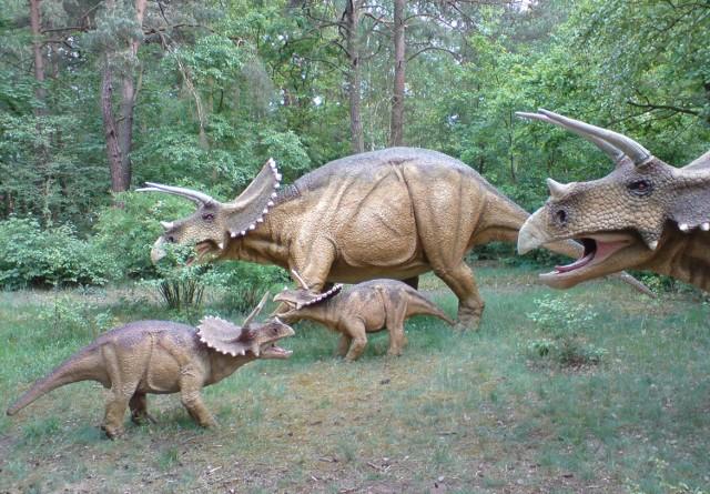Żyjący w czasach późnej kredy trójrogi dinozaur to jeden z najbardziej rozpoznawalnych prehistorycznych gadów.  Triceratops dzielił środowisko razem z tyranozaurem, ale nie był łatwym łupem dla mięsożercy. Trzy rogi i kostna kryza służyły mu do obrony, ale także do walki z innymi przedstawicielami gatunku. W ten sposób triceratopsy - podobnie jak dzisiejsze zwierzęta kopytne - ustalały hierarchię w stadzie.    Pangea - Park dinozaurów i muzeum powstanie w Poznaniu    Co się dzieje w stolicy Wielkopolski? Zajrzyj na poznan.naszemiasto.pl