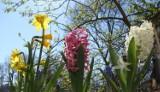 Kwiaty na balkon – wiosenna aranżacja