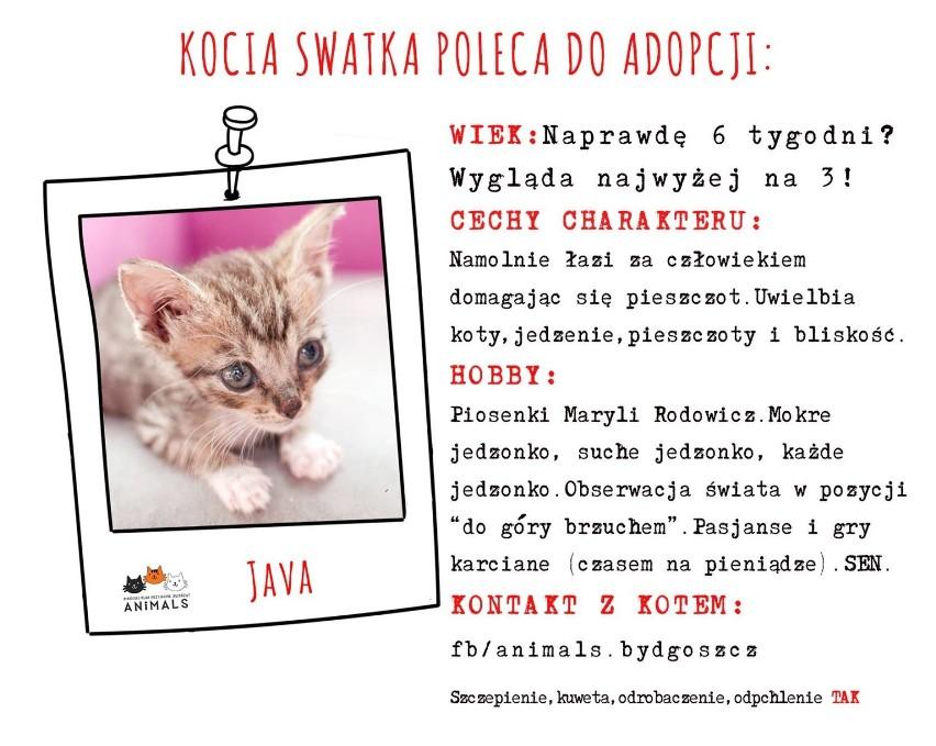 Przedstawiamy kociaki, które szukają domów. Wszystkie...