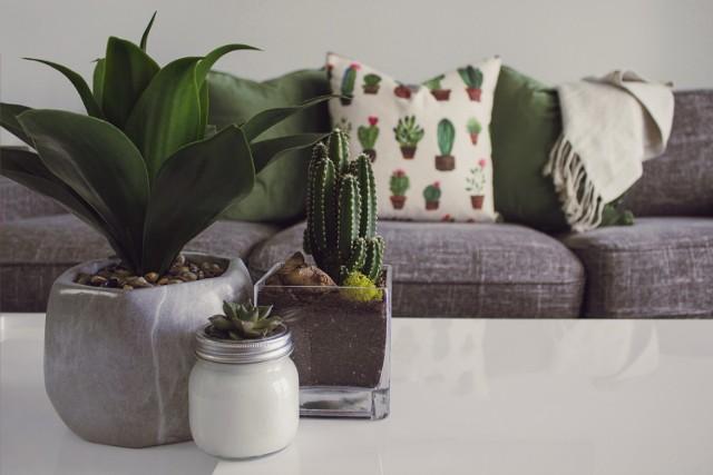 Nie każdy może być ogrodnikiem, ale każdy może hodować rośliny. Kwiaty w domu to nie tylko element wystroju wnętrz, ale też producent tlenu i naturalne oczyszczanie powietrza. Są takie kwiaty, o które nie trzeba mocno się martwić, są takie, które nie potrzebują szczególnej ochrony. Kaktusy i sukulenty to nie wszystko! Sprawdź TOP 12 roślin, które KAŻDY może mieć w swoim domu czy mieszkaniu.