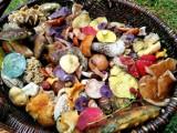 Kolorowe grzybobranie koło Szczecinka. Jesień nie tylko na drzewach [zdjęcia]