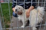 Psy z kaliskiego schroniska czekają na dom. Zobacz czworonogi do adopcji. ZDJĘCIA