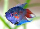 Jesteś miłośnikiem rybek akwariowych? Sprawdź, czy rozpoznasz je wszys