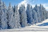 POGODA NA ZIMĘ 2020. Jaka będzie zima? Czy czeka nas zima stulecia? Prognoza długoterminowa na zimę 2020/2021 [13.10.2020]
