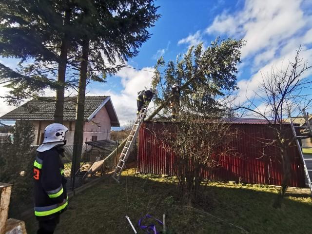 Mocne podmuchy halnego sprawiły, że drzewa łamią się, jak zapałki. Strażacy interweniowali m.in. w Zagórzanach, Szalowej, Sitnicy. Z kolei w Siedliskach potężny świerk oparł się o dach garażu. Konieczna była interwencja druhów z OSP