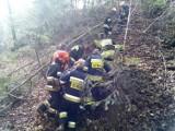 Wypadek w Przydonicy. Mężczyzna został przygnieciony przez drzewo [ZDJĘCIA]