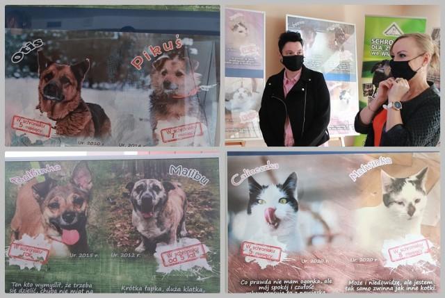 """""""Sztuką jest mieć psa"""" - to hasło wystawy zdjęć psów i kotów przeznaczonych do adopcji ze schroniska dla zwierząt we Włocławku."""