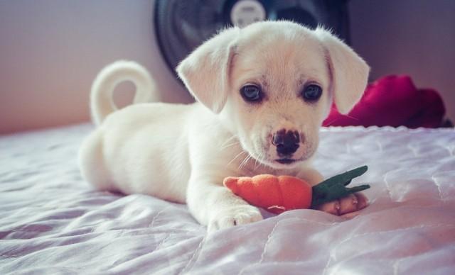 """""""Kastracja zwierząt właścicielskich"""" to akcja poświęcona przeciwdziałaniu bezdomności zwierząt. Dzięki niej białostoczanie będą mogli wykastrować swojego psa czy kota za darmo lub połowę ceny."""