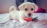 Zadbaj o swojego zwierzaka! W Białymstoku rozpoczął się projekt kastracji zwierząt