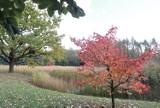 Łódzki botanik otwarty tylko do końca października. Warto wybrać się na spacer w jesiennej scenerii. ZDJĘCIA