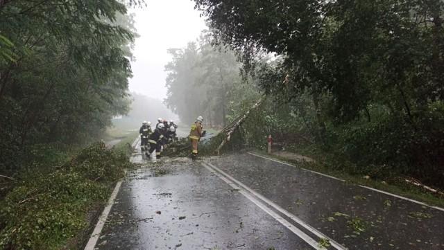 Burza uderzyła w niedzielne poołudnie najpierw w gminę Lisia Góra. Strażacy usuwali m.in. powalone drzewa na  drogach