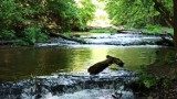Szumy nad Tanwią. Magiczne wodospady w województwie lubelskim. Zobacz zdjęcia