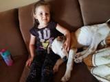 Agatka ma dopiero 6 lat, a już daje dom bezdomnym zwierzętom! Taka wolontariuszka to skarb mówią działacze TOZ