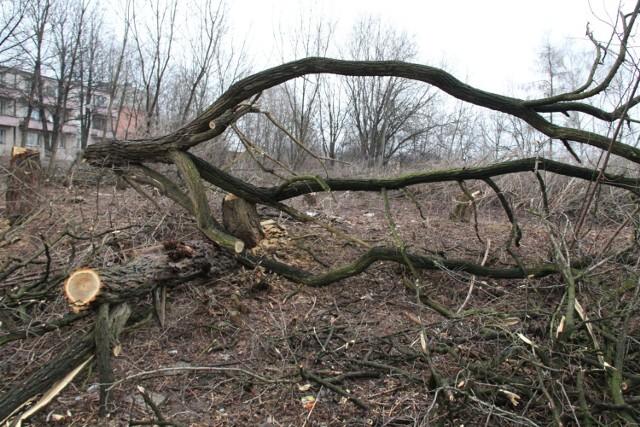 W Czeladzi przy ul. Grodzieckiej nowy właściciel terenu wycina drzewa