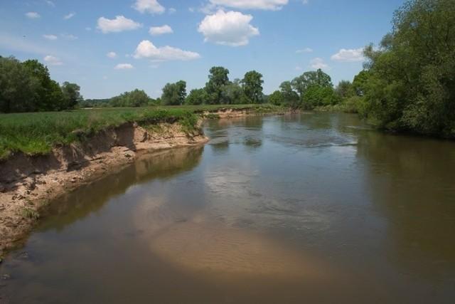 Stobrawski Park Krajobrazowy istnieje od 1999 r. Obejmuje ponad 52 tys. ha. To na jego terenie mógłby zostać wydzielony park narodowy.