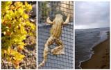 Zdjęcia naszych Czytelników z majowego weekendu. Zobaczcie, co udało im się sfotografować