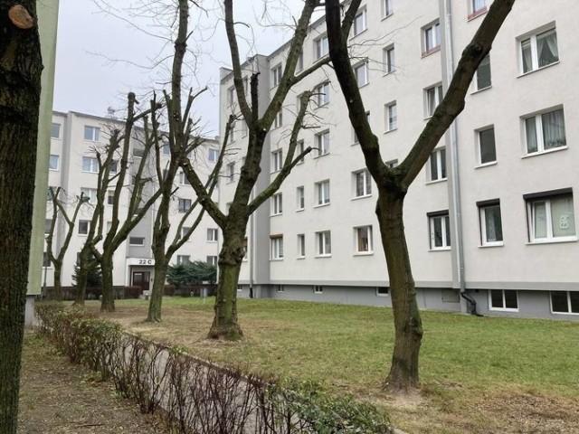 Na Piątkowie ofiarą przycinania gałęzi padło w sumie kilkadziesiąt drzew. Sprawa utknęła w Wydziale Kształtowania i Ochrony Środowiska Urzędu Miasta