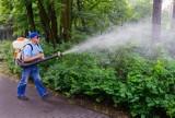 Komary w Świdnicy dają się we znaki. Oprysków jednak nie będzie, bo mieszkańcy się nie skarżą