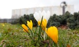 Idzie wiosna! Do kiedy będzie ciepło? Sprawdź, jaka będzie pogoda na marzec 2021