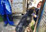 Gmina Wąsosz. Obrońcy zwierząt interweniowali w sprawie zaniedbanego owczarka. Psi dramat rozgrywał się w Kamieniu Górowskim [ZDJĘCIA]