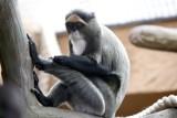 Zakończył się remont małpiarni w łódzkim zoo [ZDJĘCIA,FILM]
