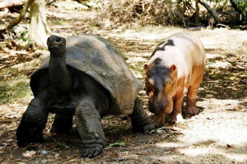 OWEN i MZEE, zoo Haller ParkOwen i Mzee to niezwykła para...