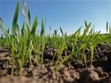 Cena ziemi rolnej 2021. Stawka za hektar w Polsce spadła! Ceny w regionach