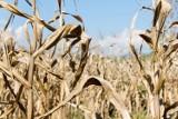 Susza, globalne ocieplenie: stan alarmowy dla świata. Naukowcy ostrzegają przed kataklizmem. Co nas czeka?