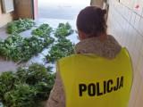 Złodziej z Woźnik wpadł w ręce policji. Miał u siebie sporo narkotyków