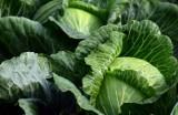 Egzotyczne warzywa to sama chemia i pestycydy? Ten raport temu przeczy. Nie uwierzysz, co naukowcy znaleźli w roślinach