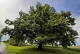 Nad zalewem w Lisowicach ma zostać posadzonych tysiąc drzew i krzewów