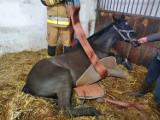 Strażacy z Gniezna pomogli ratować konia w jednej z lokalnych stajni