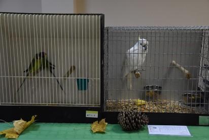 Nekla: I Wystawa Papug i Ptaków Egzotycznych [FOTO]