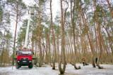 Kto skrzywił las pod Gryfinem? Odpowiedzą nam szyszki? Zobacz zdjęcia i wideo