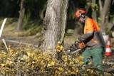 Radlin: Wycięto drzewa przy Rymera. Miasto tłumaczy