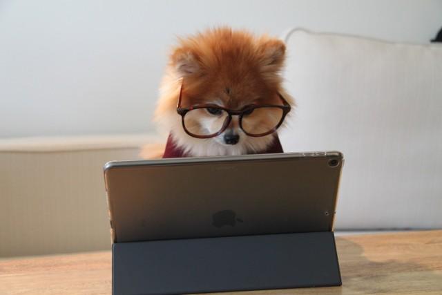 Egzamin zawierający kilkadziesiąt pytań z krótkim czasem na udzielenie odpowiedzi, kot na laptopie i partner prowadzącej zajęcia paradujący nago przed kamerą. Nauka zdalna okazuje się wyzwaniem dla wszystkich - szczególnie dla wykładowców. Przepytaliśmy studentów kilku krakowskich uczelni, jakie absurdy ze strony wykładowców pojawiły się podczas ich zdalnej nauki. Niektóre z nich śmieszą, inne wprawiają w zakłopotanie, a jeszcze inne mrożą krew żyłach. Najlepsze przykłady znajdziecie na kolejnych slajdach.