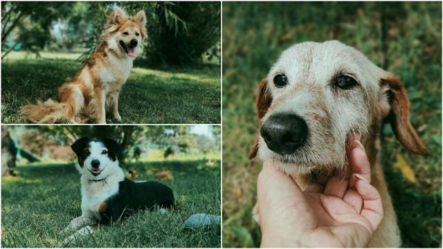 Na nowy dom w tarnowskim azylu czeka mnóstwo sympatycznych psiaków