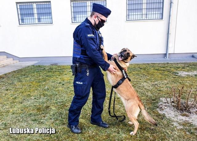Liga ma pięć lat. To policyjny pies, a dokładniej suka.