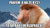 Tatrzańskie MEMY! Zobacz najśmieszniejsze obrazki o Tatrach [31.07.2020]