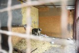 Zebrali prawie 450 tys. zł na remont schroniska dla zwierząt. Co dalej?